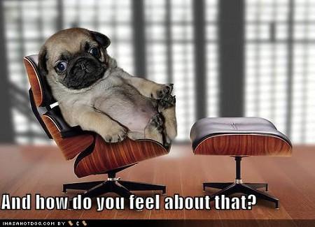dog-psychiatrist